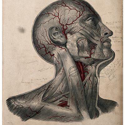Anantomy card