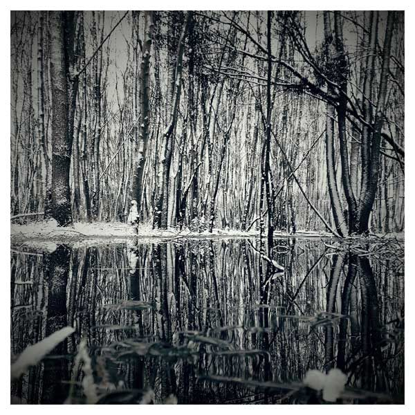 winter forest photo print