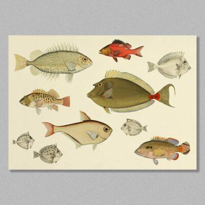 fish 03 poster