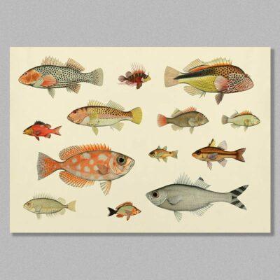 Fish 05 poster