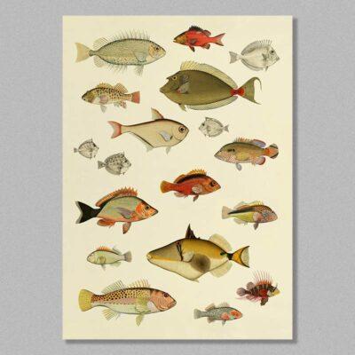 Fish 06 Poster