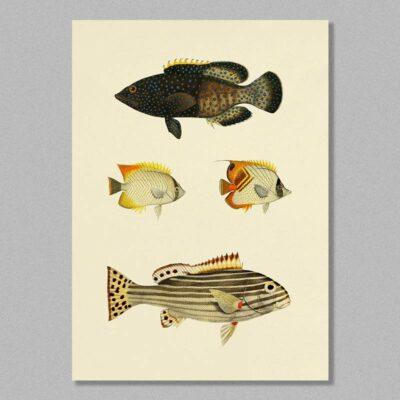 Fish 08 poster