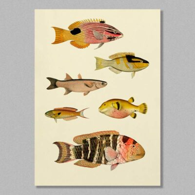 Fish 09 poster