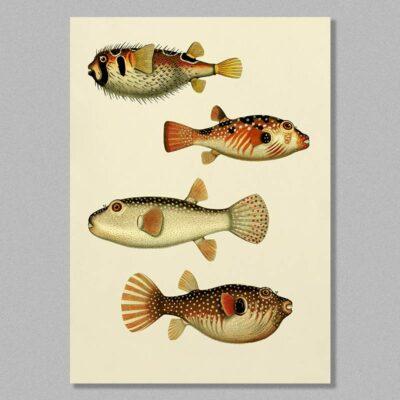 fish 10 poster