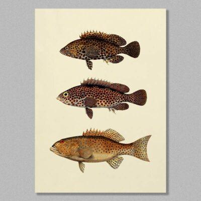 fish 11 poster