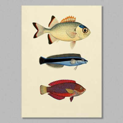 fish 13 poster
