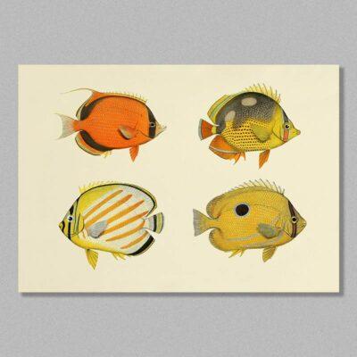 fish 15 poster