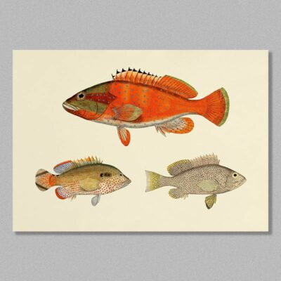fish 17 poster