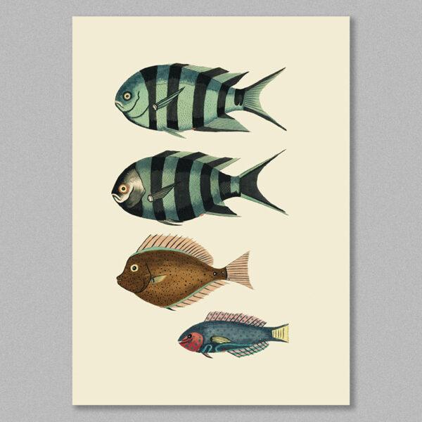 fish 18 poster