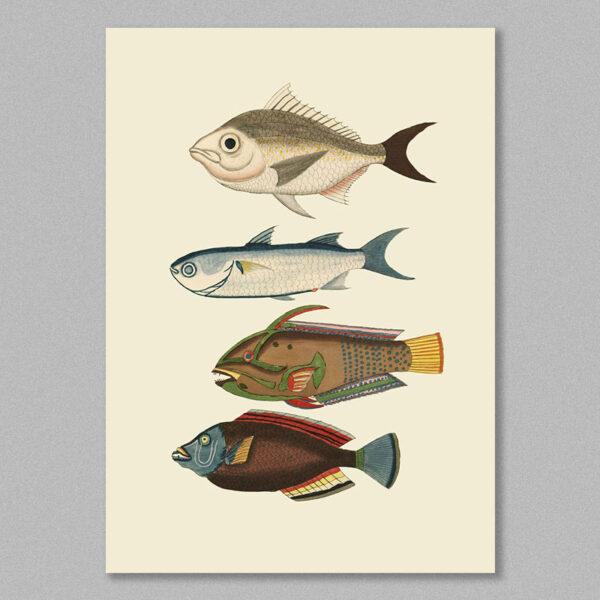 fish 19 poster