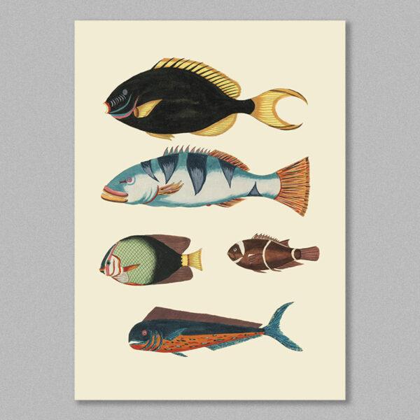 fish 21 poster