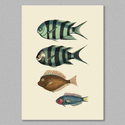 fish 23 poster