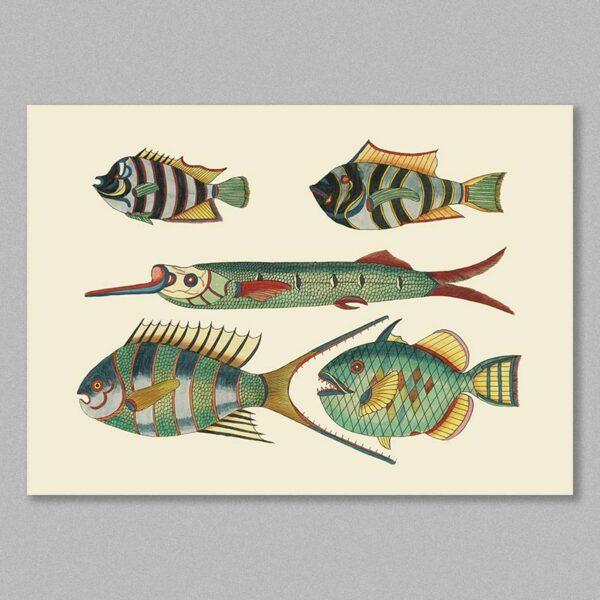 fish 25 poster