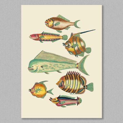 fish 28 poster