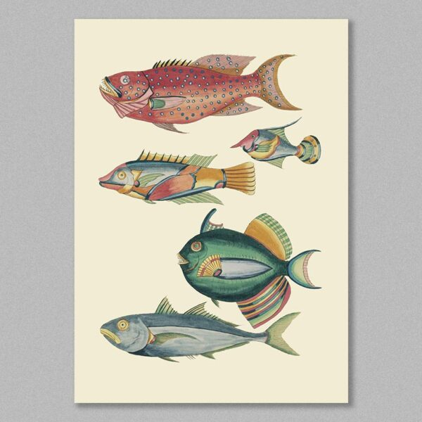fish 30 poster