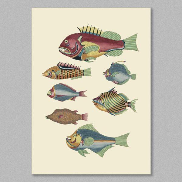 fish 31 poster