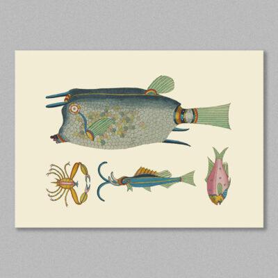 fish 32 poster
