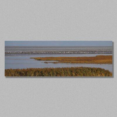 zwarte haan panorama door Ellen Floris