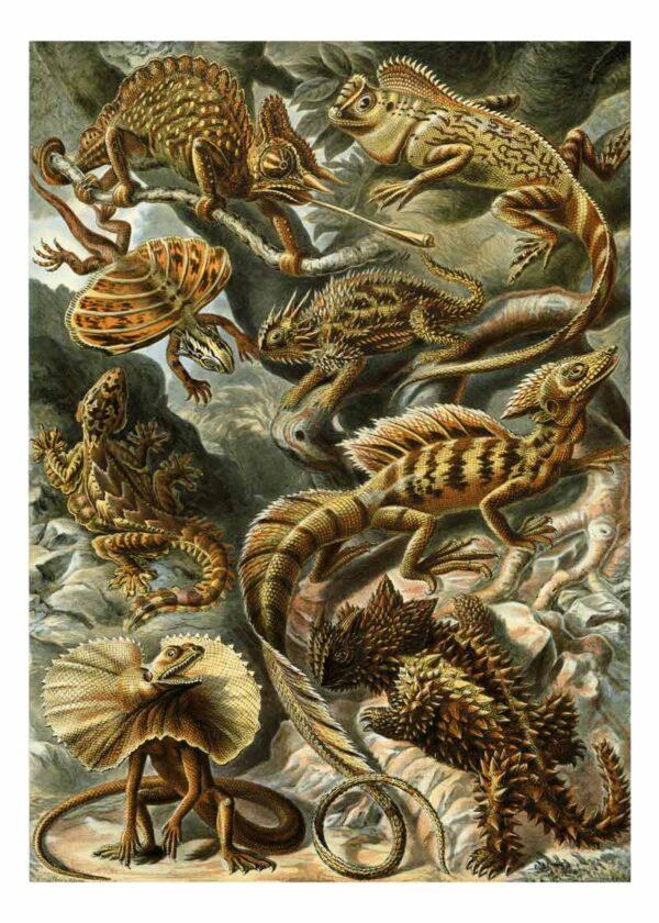 Lacertilia van Kunstformen der Natur door Ernst Haeckel