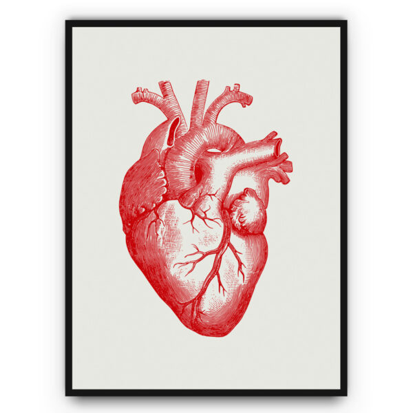 anatomical heqart poster