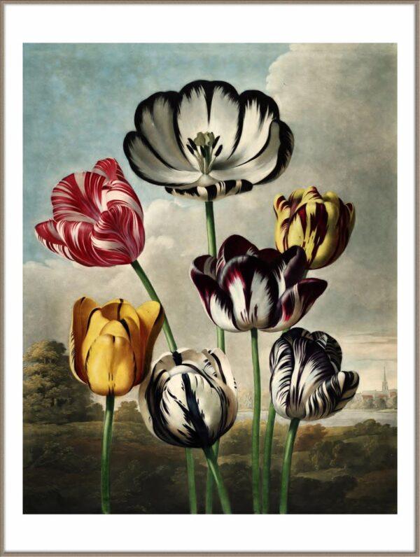 Tulpen poster - Tulips poster