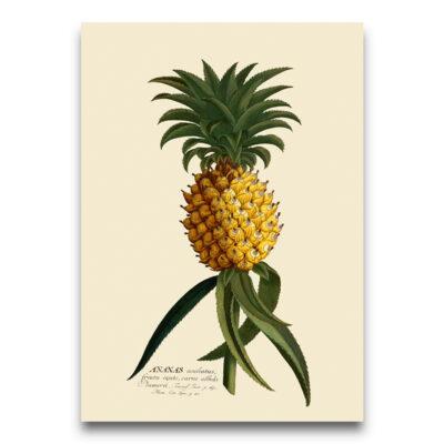 pineapple poster ivoor