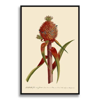 ananas folio