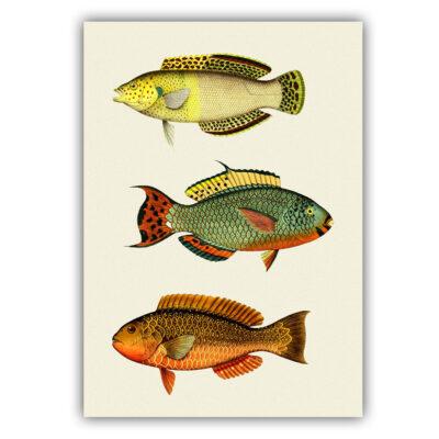 Fish 01 poster