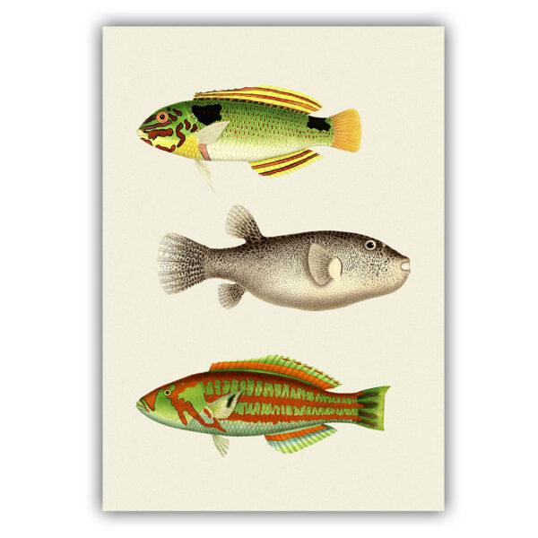 Fish poster 03