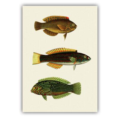 Fish poster 04