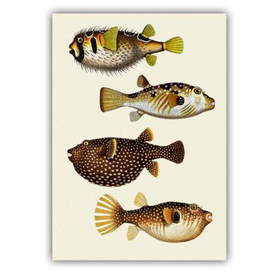 Fish poster 05
