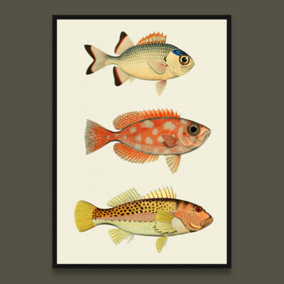 Fish poster 7