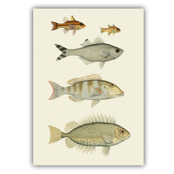 fish poster 08