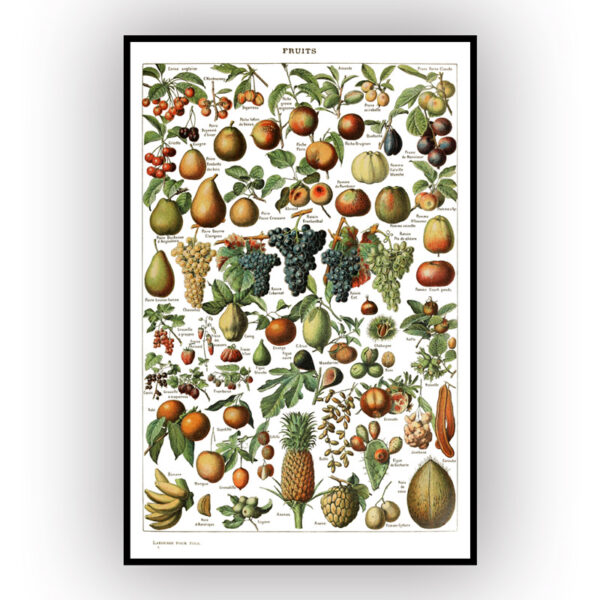 poster of fruit with white background