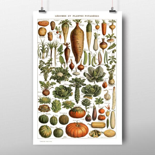 Groenten poster