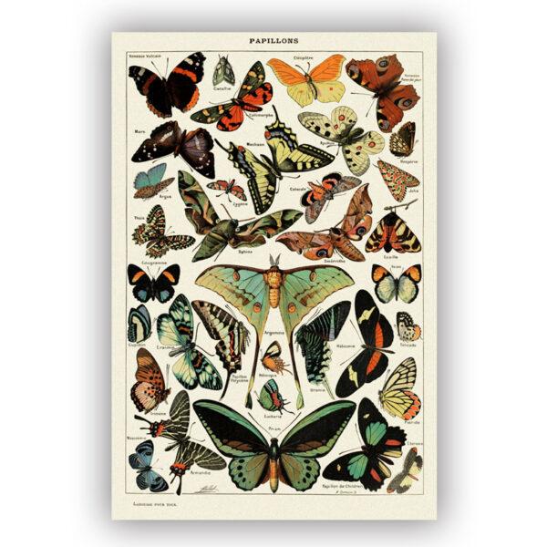 poster van vintage vlinder illustatie