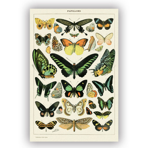 Adolphe Millot Papillon poster