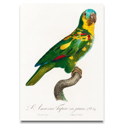 Turquoise and Yellow parrot