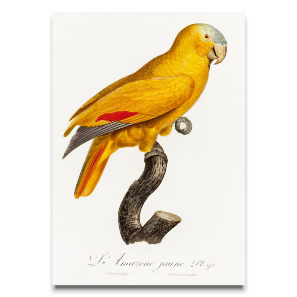 Yellow Parrot poster