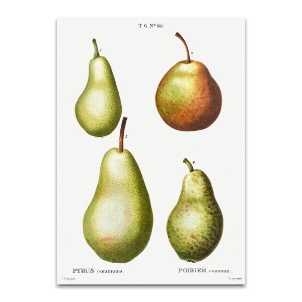 Vintage Pear posters