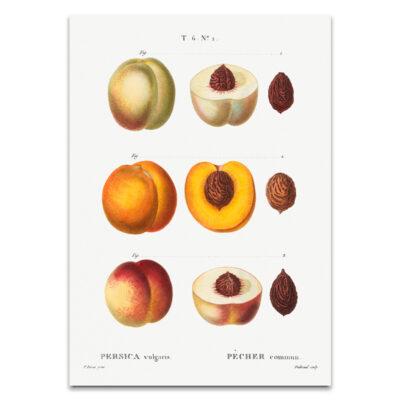 Perzik poster