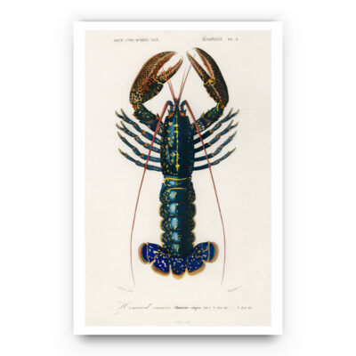 Crustaces Lobster poster