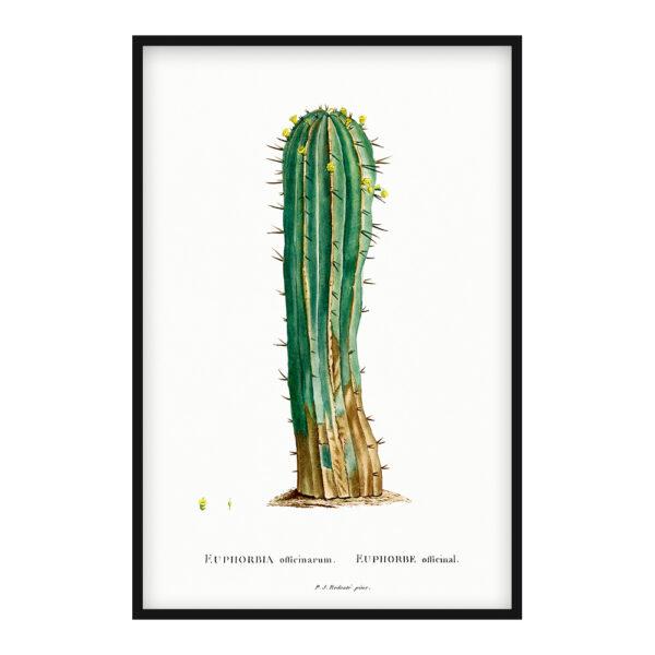 Euphorbia Officinarum poster